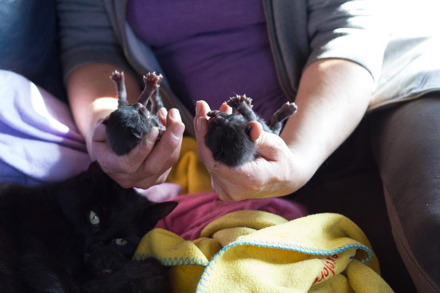 10-kittens