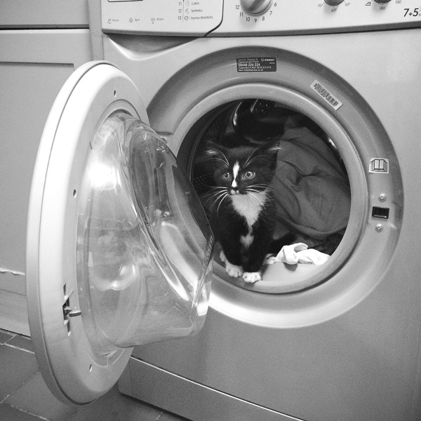 kitten sitting in washing machine